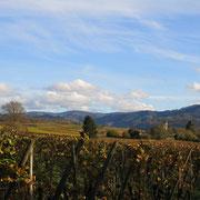 Fôret-Noire, aux alentoure du Breisgau en automne.
