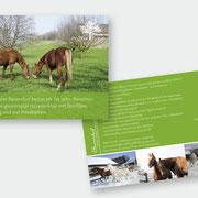 """Gestaltung Pferde-Flyer """"Im Stoss"""""""