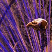 Pauw, Naturalis Biodoversity Center, Leiden