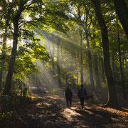 Bosjes van Poot, Den Haag