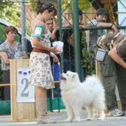 Guelfo Ris. BIS Puppy