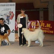guelfo 3BIS raduno CIRN Latina 2012