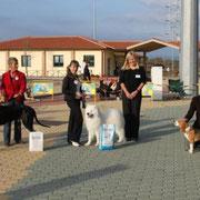 EXPO REG. FOLLONICA 30/10/2011 ARTU' 1° ECC BIS GIOVANI