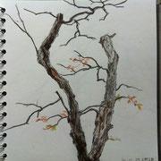 講師作品:鉛筆、色鉛筆