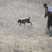 George sending Cota out for a retrieve for a Wounded Warrior.