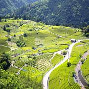 岐阜のマチュピチュ 天空の茶畑 ハイキング