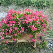les fleurs s'épanouissent