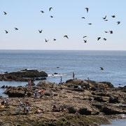 照ヶ崎海岸とアオバト