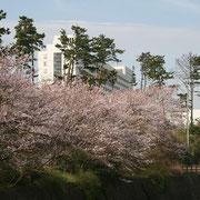 桜 大磯プリンスホテル