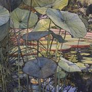 Botanic Lily Pond