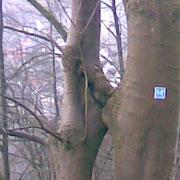 Auch Bäume ...