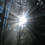 Nebelstimmung im Bodenbauer-Wald