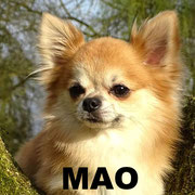 Mao-Tsiko -