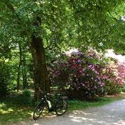 Steinway-Park Seesen