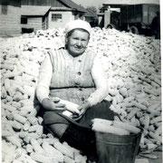 переборка кукурузы на току
