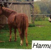 Harmada