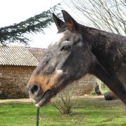 Roi de Sèvres