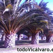 Bulevar Jose Prat