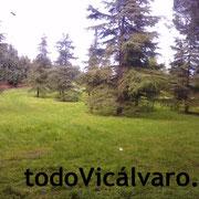 Parque Forestal de Vicálvaro