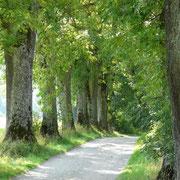 Usedom