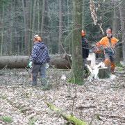 die Arbeit im Wald ist zwar hart,  macht aber besonders viel Spass