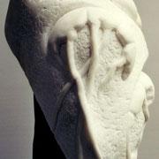 JELLYFISH (Detail)