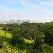 Aussicht vom Erlerberg zum Kaisergebirge