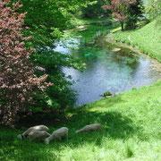 Blaue Qulle Naturdenkmal