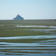 Baie du Mont-Saint-Michel (Manche) : les prés salés
