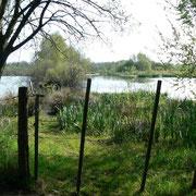 le Marais du Grand Hazé (Briouze, Orne)