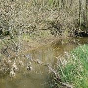 le Marais du Grand Hazé (Briouze, Orne) : le chemin du Breuil