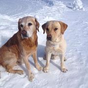 Bube und Bruno