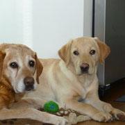 Bruno und Bubi