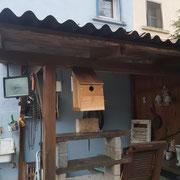 Vogelhausbau während der Schonzeit auf Krähen