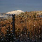 Winterstimmung am Lusen im Nationalpark Bayerischer Wald