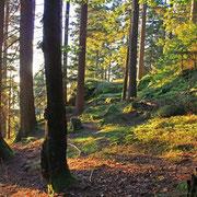 Herbstlicher Wald am Gsengetstein im Naturpark Bayerischer Wald