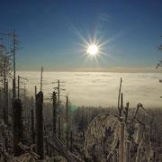 Winterstimmung im Nationalpark Bayerischer Wald