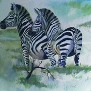 Illusion pur! Die Dachschräge läuft waagerecht durch die Zebrakörper. Privatkunde