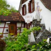 2016 Rheineck   Das wäre doch ein zuhause...