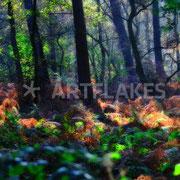 Galerie Spaziergang durch den Zauberwald auf Artflakes