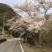 群馬で迷子中撮った桜