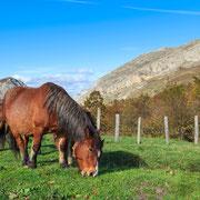 Hayedo de Montegrande en Otoño. #VallesDelOso