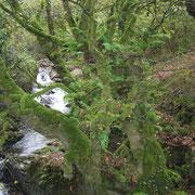 Naturaleza asturiasna.  El Sabil. Senda del Oso.