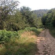 Hayedo de Montegrande. Teverga. Valles del Oso. Asturias