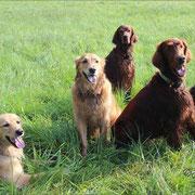 Von links nach rechts: Bellis, Luna, Samba, Socke, Emma