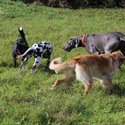 Von links nach rechts: Stella, Suri, Bellis, Dogge