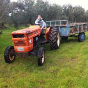 Bild mit einem Jungen der einen Traktor mit Anhänger fährt in einer Olivenbaumplantage