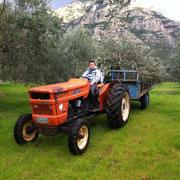 Bild mit einem Jungen der auf einem Traktor mit Anhänger sitzt im Hintergrund Olivenbäume und Berge