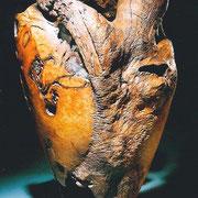 """""""Homo sapiens dehiscens"""" chêne vert - h 80 cm- dos - 2000 - 2003"""