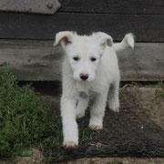 ... der kleine Bursche heißt jetzt FLOCKI - DANKE, liebe Patentante Sandra / Tierliebhaberin ♥